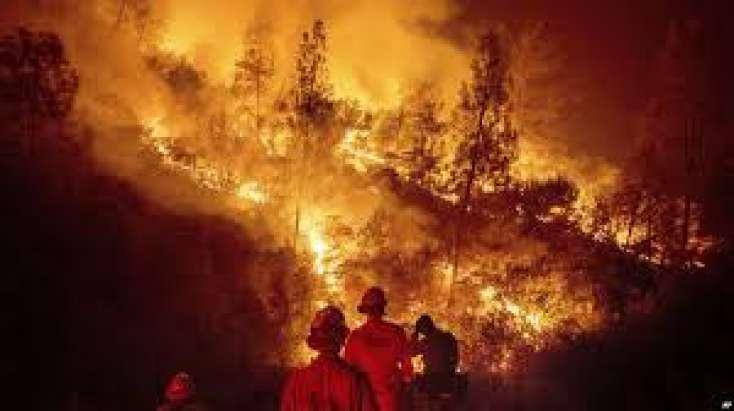 Kaliforniyada meşə yanğınları zamanı ölənlərin sayı 88-ə çatıb