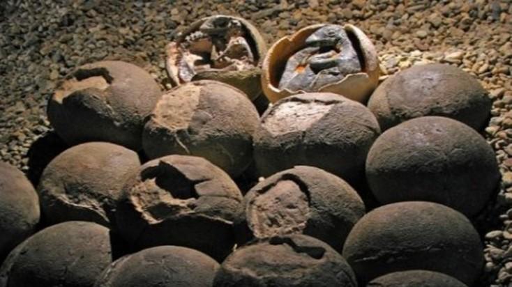 Dinozavr yumurtaları tapıldı - Çində