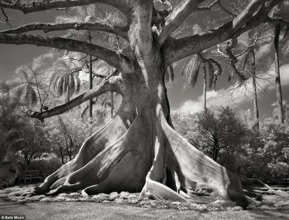 Dünyanın ən qoca ağacları - FOTO