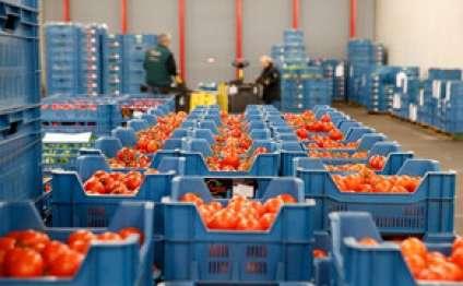 Rusiya 36 tondan çox Azərbaycan pomidorunu geri qaytarıb
