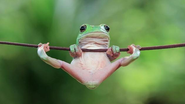 Qurbağaların əyləncəli dünyası - FOTOLAR